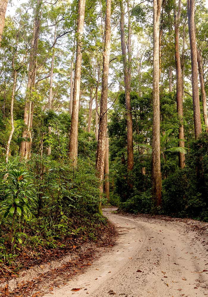 Rainbow Beach 4wd Tours to the Rainforests